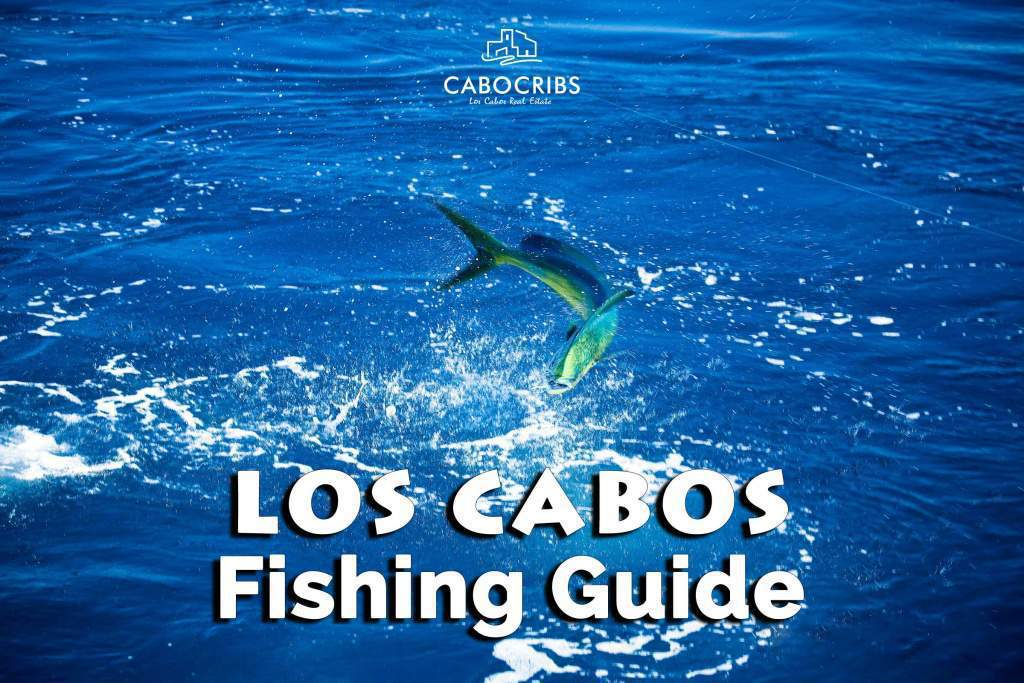 Los Cabos Fishing Guide For Fishermen