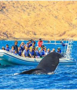 Whale Watching Los Cabos