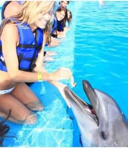 Dolphin Encounter Los Cabos