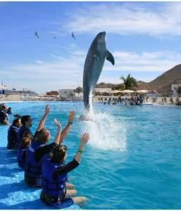 Dolphin Experience Los Cabos