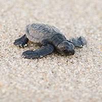 turtle-release los cabos