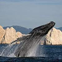 whale-watching los cabos